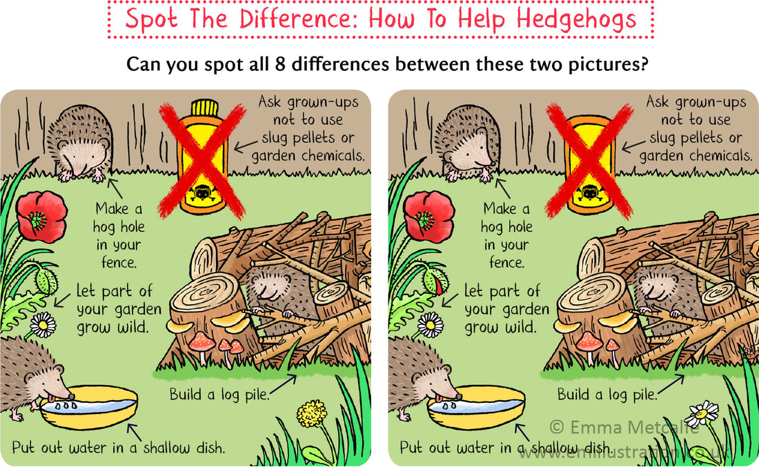 Children's educational conservation activity, ways to help hedgehogs illustration by emma metcalfe