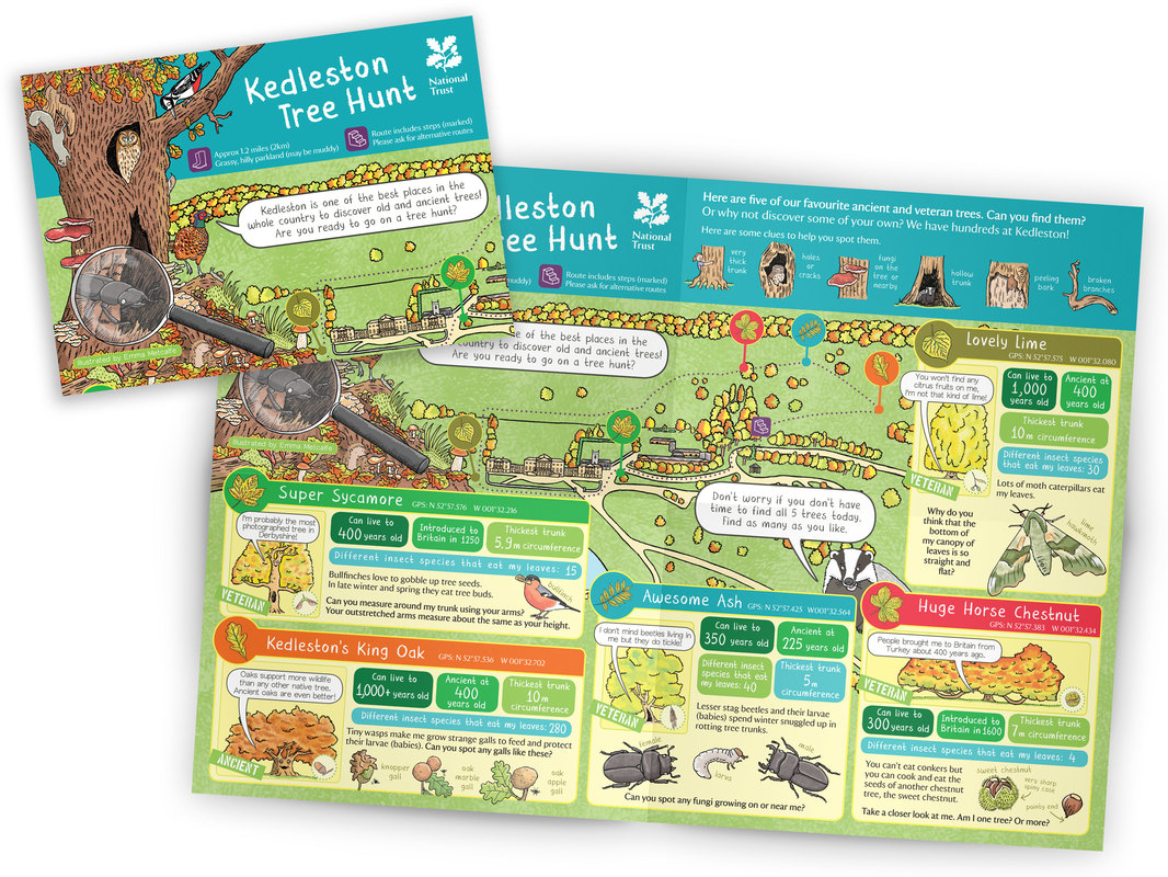 National Trust Kedleston Hall children's illustrated tree trail leaflet map by Emma Metcalfe