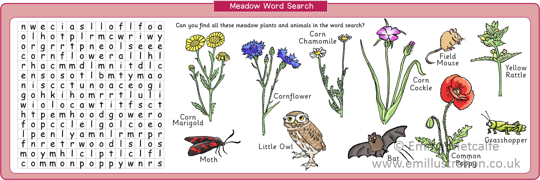 Meadow conservation educational word search illustrated by nature illustrator Emma Metcalfe