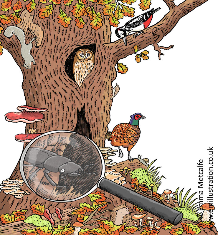 Cartoon wildlife illustration of ancient tree with pheasant, tawny owl, squirrel, woodpecker, hedgehog, bracket fungus, moss, snail