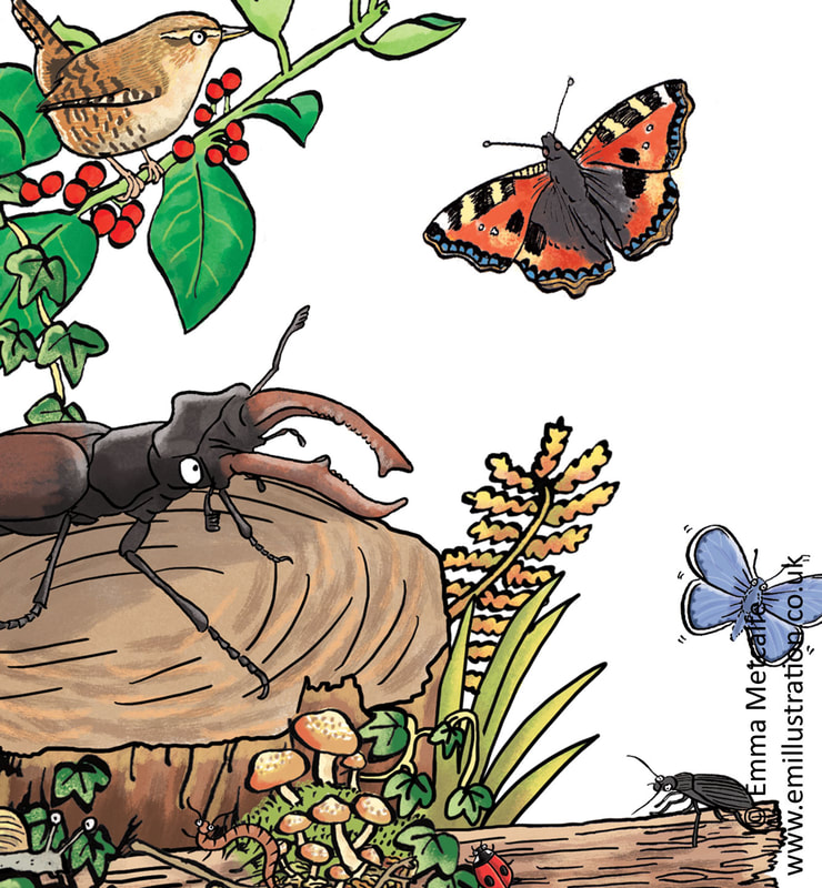 Children's educational cartoon illustration of endangered stag beetle on tree stump illustrated by emma metcalfe